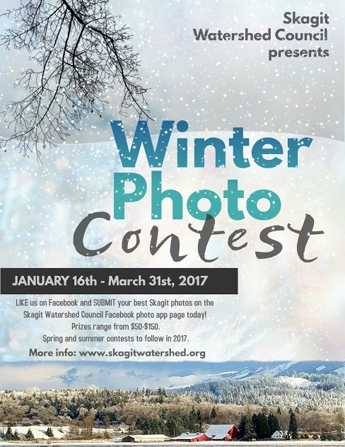 Winter photo contest flyer - small